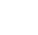 RICARDO NM WILDLIFE PHOTOGRAPHY